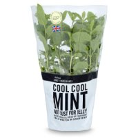 Cooks' Ingredients Mint Pot