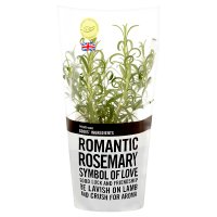 Waitrose Cooks' Ingredients British rosemary pot medium