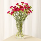 Waitrose Spray Carnations - bunch