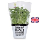 Waitrose Cooks' Ingredients British curly leaf parsley pot large -