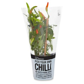 Limited selection chilli plant