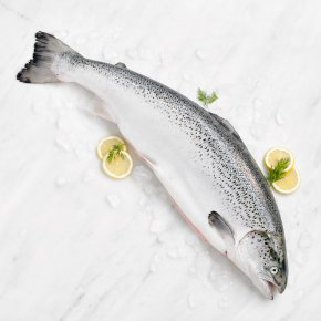 Small Fresh Whole Scottish Salmon